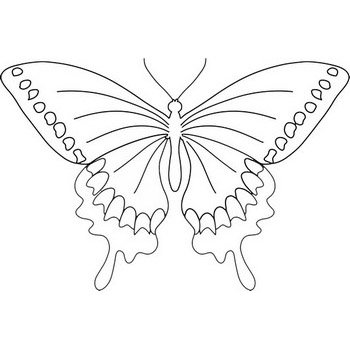 Dashing Butterfly Coloring Page