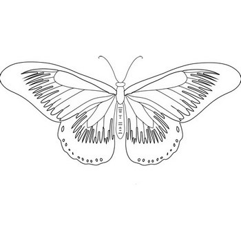Large Butterfly Coloring Page